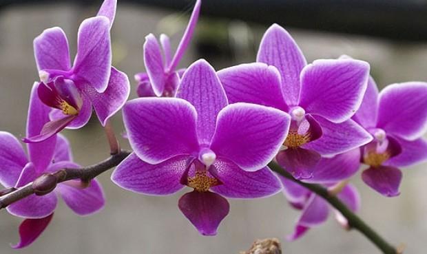 tarapoto-orquideas-Noticia-731218