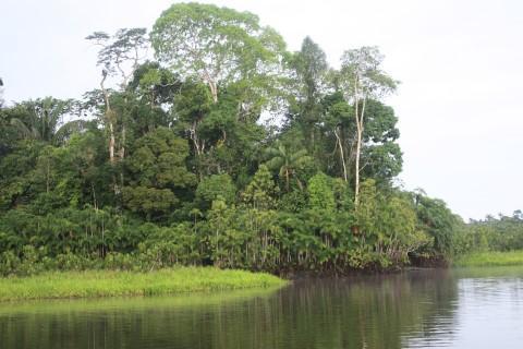 bosque_ecuador_mobile