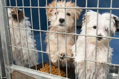san-francisco-ley-obliga-a-que-los-pet-shop-vendan-c3banicamente-animales-rescatados