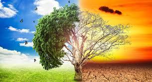 cambio climático.5